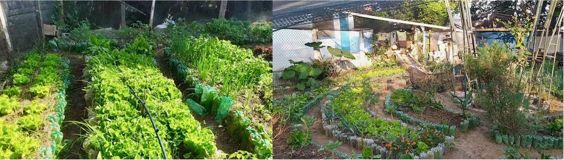 Sustainable Green Dish Garden